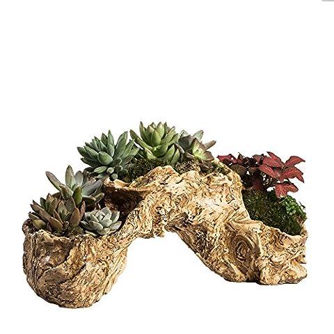 NCYP Resin Artificial Twisted Driftwood Planter Toot Flower Pot Sculpture Succulent Planter Multilayer 3 Pots for Decoration No (Large Flat Planter)