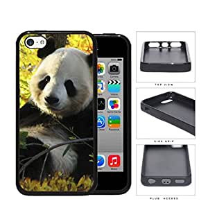 Cute Baby Panda In The Field PC Silicone Hard Cell Phone Case Apple iPhone 5c