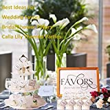 24 Pack Wedding Favors Bridal Shower Favors Candles Calla Lily Style Candle Favors Gift Boxed with Thanks Cards for Bridal Shower Favors Return Gifts Wedding Favors Return Gifts Keepsakes Giveaways