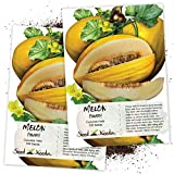 Seed Needs, Canary Melon (Cucumis melo) Twin Pack of 100 Seeds Each Non-GMO