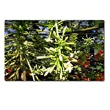 Liili Large TableMat Papaya Male Inflorescence Flower Natural Rubber Material Image 239009