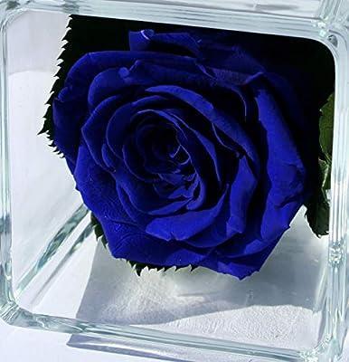 Rubis Rose Rosa Blu Oltremare Eterna Sotto Vetro E Cube Di Vetro Rosa Naturale Stabilizzata E Foglie Di Rosa Stabilizzate Prodotto Di Alta Gamma