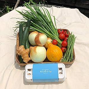【産地直送】高知県 土佐山産 厳選野菜6種|有機JAS認定生姜|土佐ジローの卵 (お米なし)