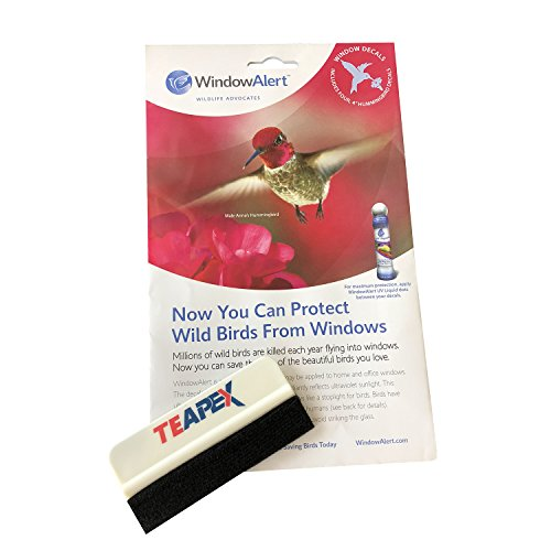 - Window Alert Hummingbird Decal Includes Teapex Brand Squeegee Bundle