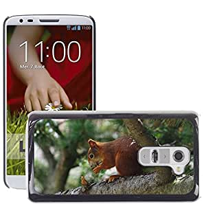 Super Stella Slim PC Hard Case Cover Skin Armor Shell Protection // M00144341 Squirrel Animal Tree Mammal Nature // LG G2 D800 D802 D802TA D803 VS980 LS980