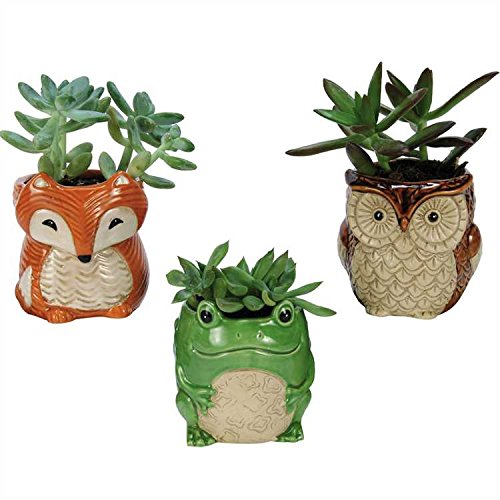 cute-mini-woodland-creatures-planters-set-of-three