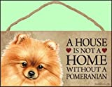 A house is not a home without Pomeranian Dog - 5