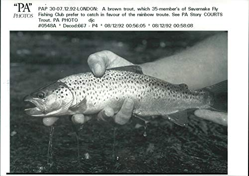 Vintage photo of brown trout Fish