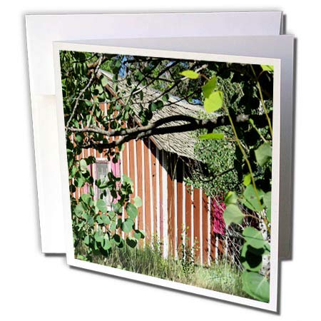 Shutter Pine - 3dRose Jos Fauxtographee- Shed Beyond The Trees - A shed Behind Some Trees with red and White Stripes and Pink shutters - 1 Greeting Card with Envelope (gc_301822_5)