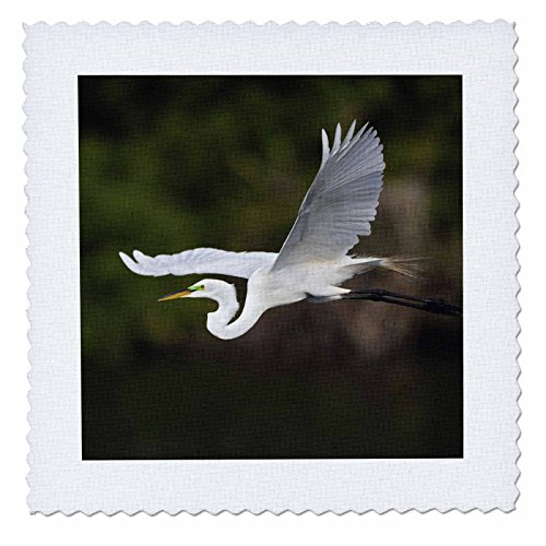 (3dRose qs_89016_1 Great Egret Bird in Flight, Sanibel Island, Florida-Us10 Aje0244-Adam Jones-Quilt Square, 10 by 10-Inch)
