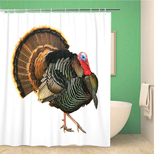 Awowee Bathroom Shower Curtain Turkey Tom Strutting His Stuff Red Wattles and Blue Polyester Fabric 60x72 inches Waterproof Bath Curtain Set with Hooks