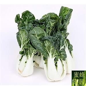 Regular Beautifying Balcony Cabbage Seed Milk Four Seasons Planting Nutrient Rich 100 Seeds (nai bai cai)