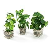 Nattol Set of 3 Artificial Plants, Faux Tabletop Greenery with Clear Glass Pots