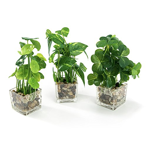 Nattol Set of 3 Artificial Plants, Faux Tabletop Greenery with Clear Glass Pots by Nattol