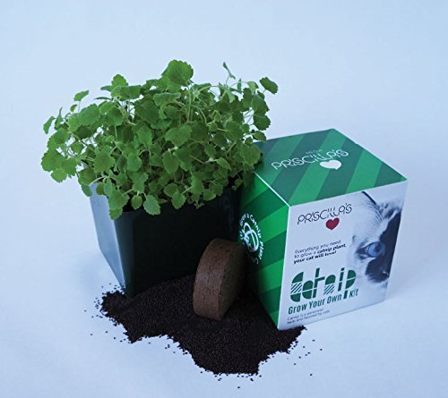 Image of Priscilla's Grow Your Own Catnip Kit