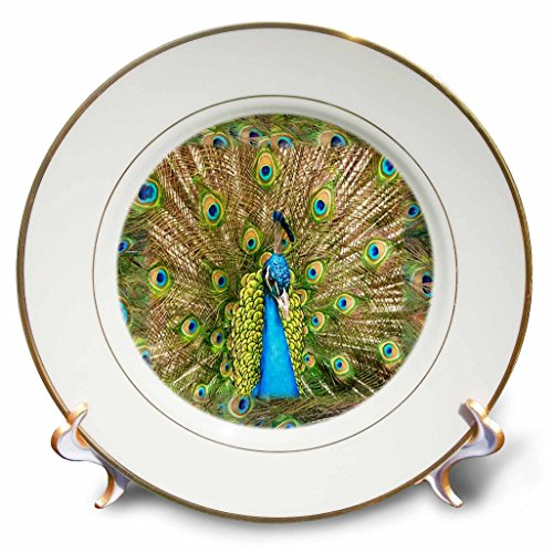 3dRose cp_41699_1 Peacock Head N Peacock Feathers Porcelain Plate, 8