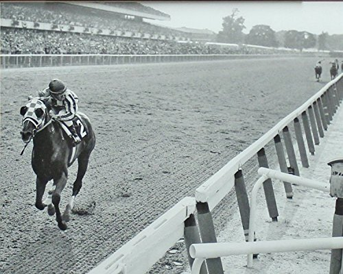 Secretariat Wins At Belmont 8 x 10 Classic Old Photos Vintage Classic Rare Find (Secretariat Wins)