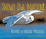 #8: Snowy Owl Invasion!: Tracking an Unusual Migration