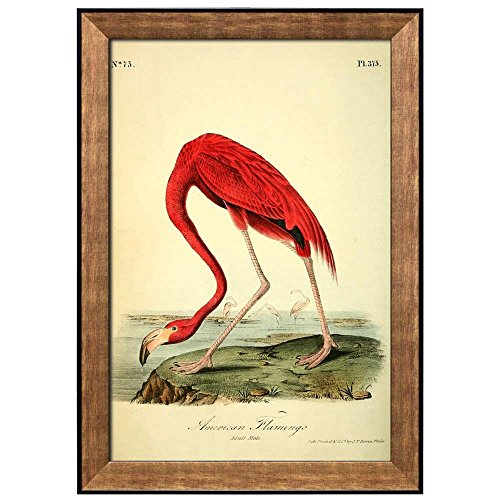 Wall26 - Beautiful Illustration Inside of an Elegant Frame of a American Flamingo by John James Audubon - Framed Art Prints, Home Decor - 24x36 ()