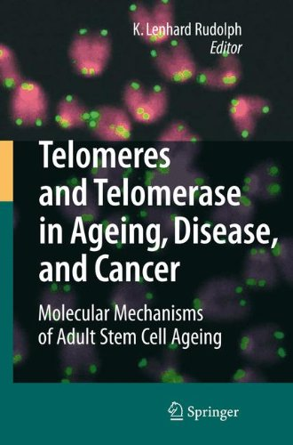 Telomeres and Telomerase in Aging, Disease, and Cancer: Molecular Mechanisms of Adult Stem Cell Ageing