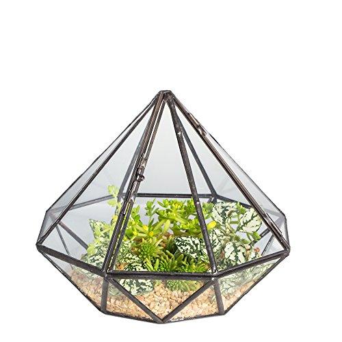 NCYP Diamond Shape Glass Geometric Terrarium Succulent Fern Moss Planter Monder Garden Desk Top Display Flower Pot Centerpiece for Wedding Coffee Table Gift (No Plants) by NCYP
