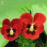 HEART SPEAKER 100Pcs Multicolor Beautiful Pansy Seeds Bonsai Plant Flower Home Garden Decor