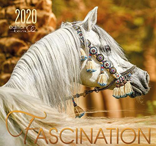 Fascination 2020  Arabische Pferde