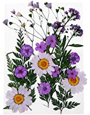 EXCEART 22pcs DIY Dried Flower Scrapbooking Real Dried Flower Flower Plant Pressed Specimen for Bookmark Diary Book