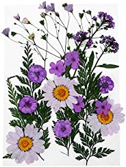 EXCEART 22pcs DIY Dried Flower Scrapbooking Real Dried Flower Flower Plant Pressed Specimen for Bookmark Diary