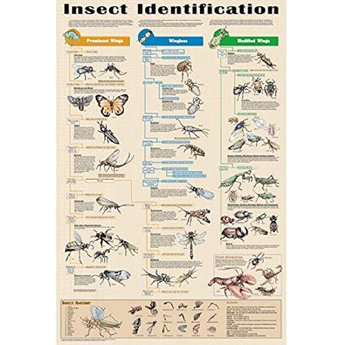Insect Identification Educational Science Arthropod Classroom Chart Print Poster 24×36