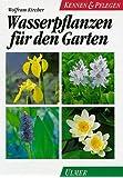 Wasserpflanzen für den Garten: Die besten Sumpf- und Wasserpflanzen für den Gartenteich