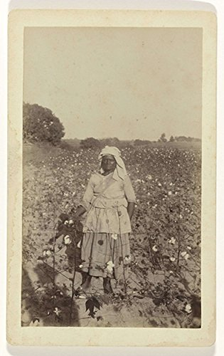 Classic Art Poster - Woman in cotton field, Aw M?ller, c. 1870 - c.