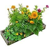 Seedsheet Rollout Garden - NonGMO Seeds (Flower Kit)