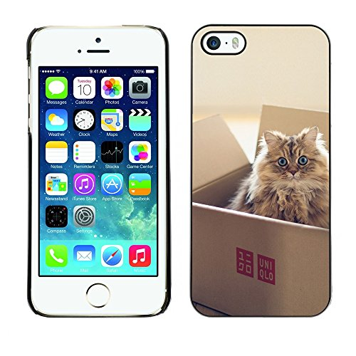 [ For APPLE IPHONE 5 / 5S ][ Xtreme-Cover ][ Coque Rigide Case Cover ] - Cute Scottish Fold Cat