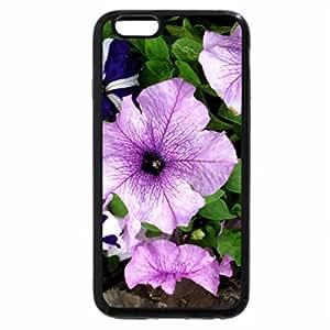 iPhone 6S Plus Case, iPhone 6 Plus Case, A petunia