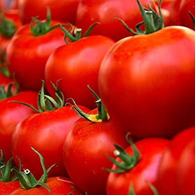 Tomato Garden Seeds - Husky Red Hybrid - Non-GMO, Vegetable Gardening Seed