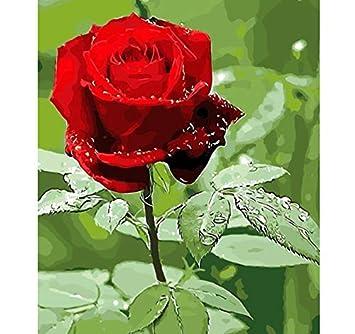 Ddbbhome Flores Naturales Coloridas Del Loto Cuadro De La Pintura Al