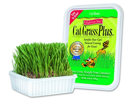 Cat-A'bout Multi-Cat CatGrass Plus Tub 150 grams by MiracleCorp/Gimborn from Miracle Care