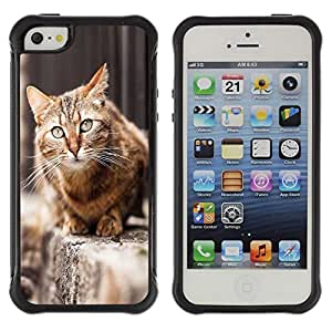 LASTONE PHONE CASE / Suave Silicona Caso Carcasa de Caucho Funda para Apple Iphone 5 / 5S / House Cat Shorthair British Street Furry