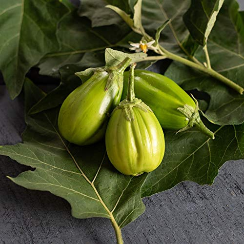 David's Garden Seeds Eggplant Comprido Verde Claro SL4222 (Green) 25 Non-GMO, Open Pollinated Seeds