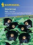 Stockrosen 'Nigra'