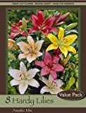 Asiatic Lily Mix Pack of 8 Bulbs