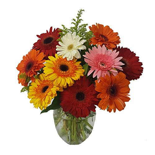 Gerbera Daisies by Ashland Addison - Fresh Flowers Hand Delivered - Chicago Area -