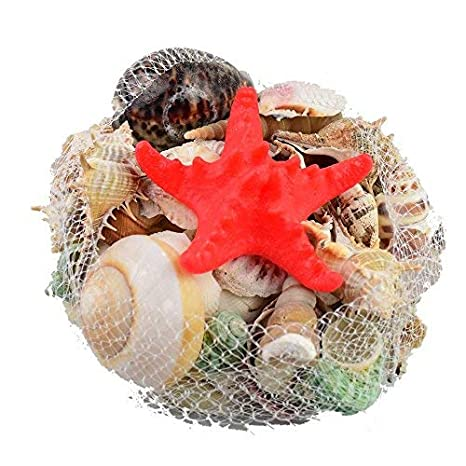 0.5kg Mar Cáscara Conchas marinas playa Estrella de mar Pequeña Grande Boda Mesa Decoración Kraft Náutico Mar Cáscara: Amazon.es: Hogar