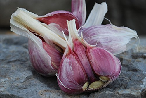 Chesnok Red Garlic, 2 Nice Bulbs. Great for Fall Planting! Non GMO