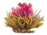 Primula Tea Flower Variety Pack