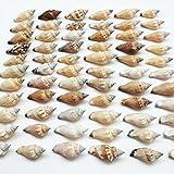 PEPPERLONELY Brown Chulla Strombus Conch Sea Shells, 8 OZ Approx. 100+PC Shells, 1 Inch ~ 1-1/2 Inch