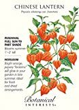 Chinese Lantern Heirloom Seeds - 150 mg - Physalis