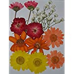 LoveDiyLife-Red-Flower-White-Sweet-Alyssum-with-Branch-and-Mini-Rose-Yellow-Daisy-and-Viola-Real-Pressed-Dried-Flowers