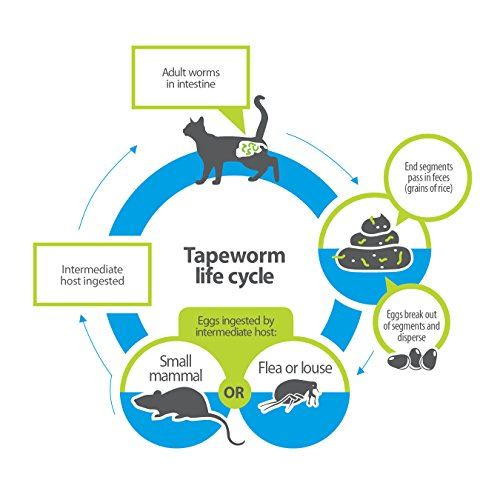 Bayer Tapeworm Dewormer for Cats 6 weeks and older